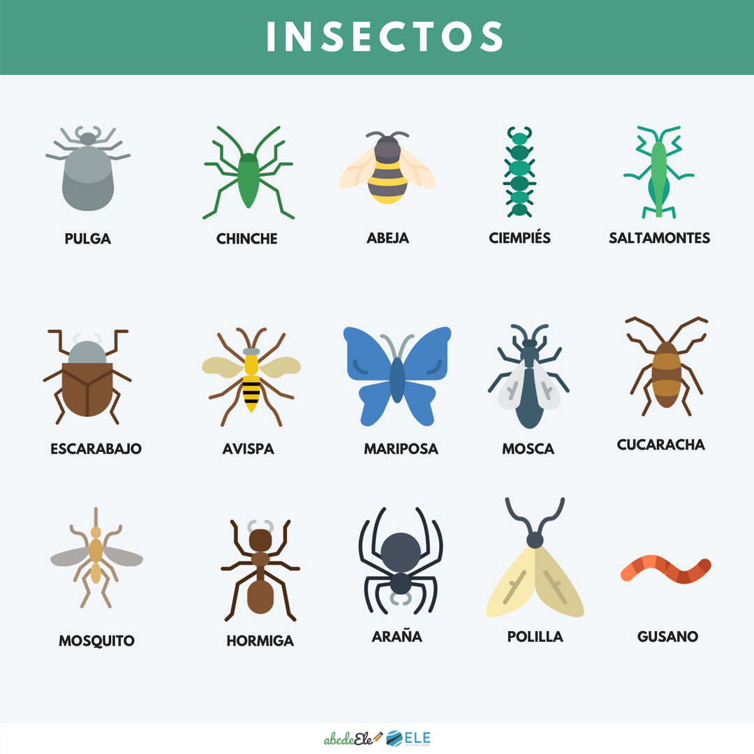 Pósteres vocabulario clase de ELE. Vocabulario animales ELE. Spanish animals vocabulary. #spanishteacher #profedeele