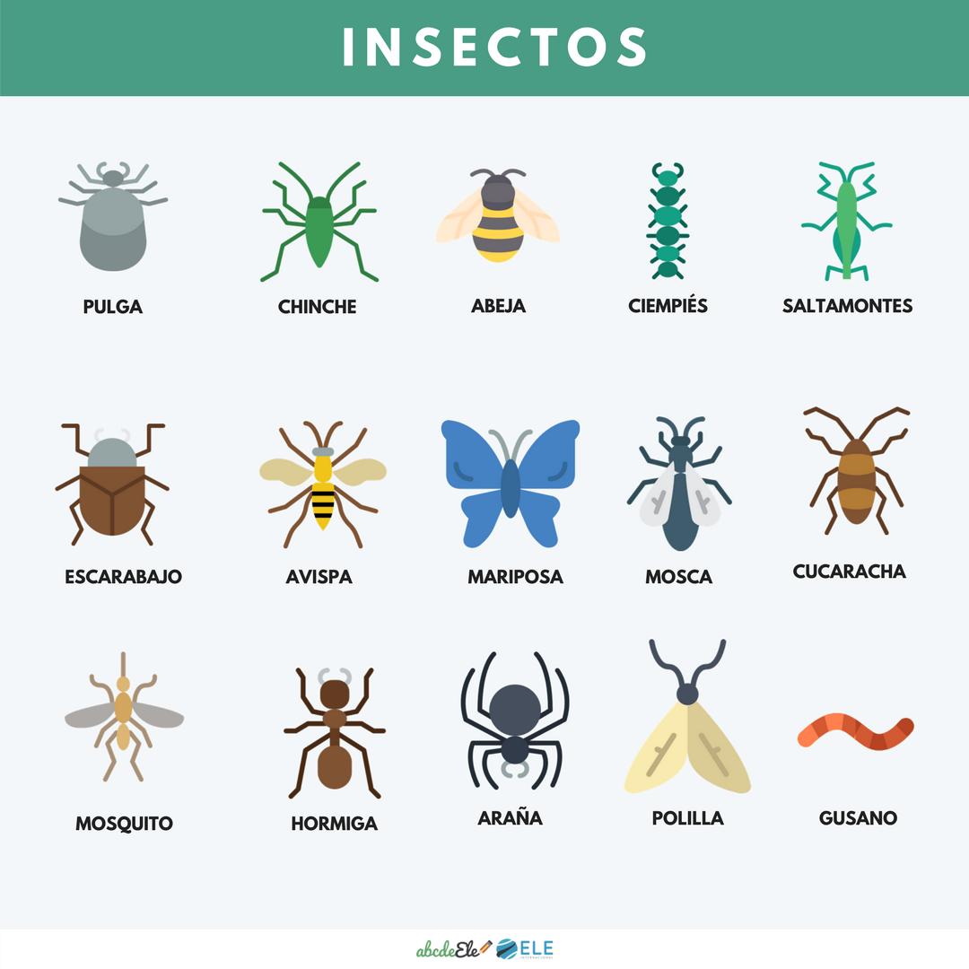 Pósteres vocabulario clase de ELE. Vocabulario animales ELE. Spanish animals vocabulary. #spanishteacher #profedeele